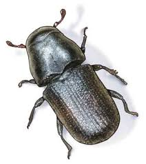 Chenango County 4-H Backyard Beetle Program