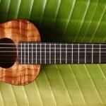 ukulele-water-melon