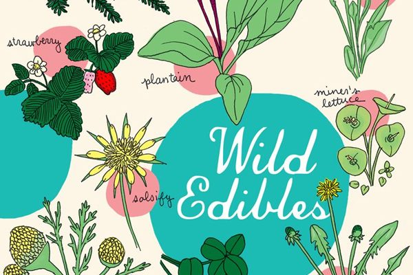 Foraging for Wild Edibles and Making Tents with Newspaper